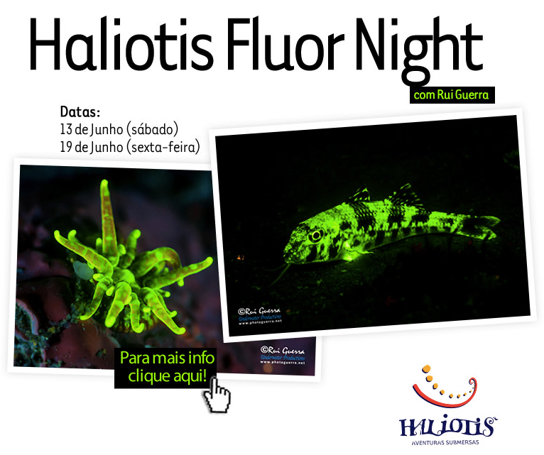 haliotis fluor night